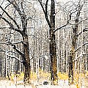 First Snow. Tree Brothers Art Print