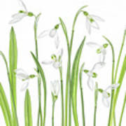 First Snowdrops Art Print