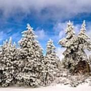 First Snowfall Art Print