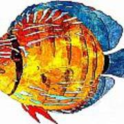 Fish 502-11-13 Marucii Art Print