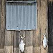 Fish Drying Outside Fisherman House Art Print