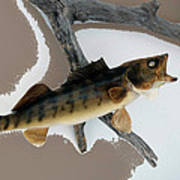 Fish Mount Set 02 C Art Print