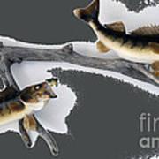 Fish Mount Set 06 B Art Print
