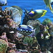Fish - National Aquarium In Baltimore Md - 1212113 Art Print by DC Photographer