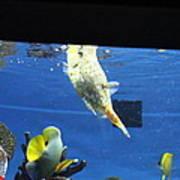 Fish - National Aquarium In Baltimore Md - 1212117 Art Print