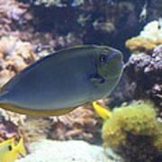 Fish - National Aquarium In Baltimore Md - 1212121 Art Print