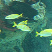 Fish - National Aquarium In Baltimore Md - 1212141 Art Print by DC Photographer