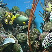 Fish - National Aquarium In Baltimore Md - 121232 Print by DC Photographer