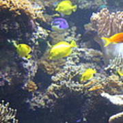 Fish - National Aquarium In Baltimore Md - 121246 Art Print by DC Photographer