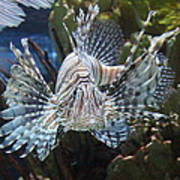 Fish - National Aquarium In Baltimore Md - 121266 Art Print by DC Photographer