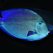Fish Not For Dinner Art Print