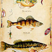 Fish Trio-c Art Print