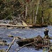 Fishing In Pacific Northwest Art Print