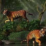 Fishing Tigers Art Print