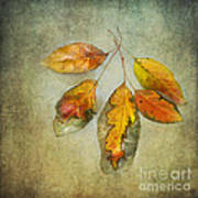 Five Autumn Leaves Art Print