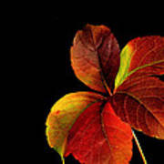 Five Leaves Art Print