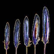 Five  Purple Feathers Art Print