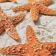 Five Starfish Art Print