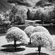Five Trees Art Print