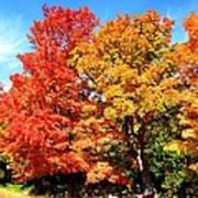 Flamboyant Autumn Art Print