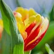 Flame Leaf Tulip Art Print
