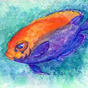 Flameback Angelfish Art Print