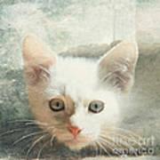 Flamepoint Siamese Kitten Art Print