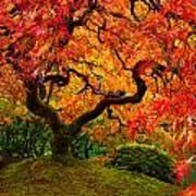 Flaming Maple Art Print