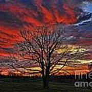 Flaming Oak Sunrise Art Print