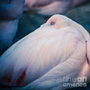 Flamingo 1b - Square Art Print