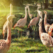 Flamingo Art Art Print
