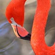 Flamingo Curves Art Print