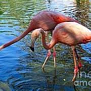 Flamingo Duo Art Print