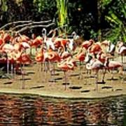 Flamingo Family Reunion Art Print