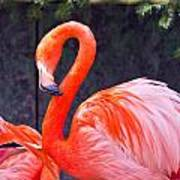 Flamingo In The Wild Art Print