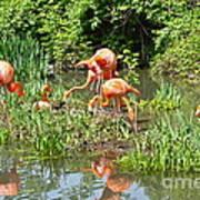 Flamingo Island Art Print
