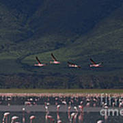 Flamingos  #6590 Art Print