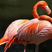 Flamingos Art Print by John Kunze