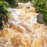 Flash Flood In West Coast Creek Of Nz South Island Art Print