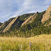 Flatirons With A Purple Wildflower  Art Print