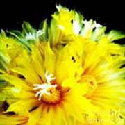 Fleurs De Cactus 2 Art Print