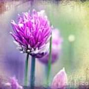 Fleurs De Oboulette Art Print