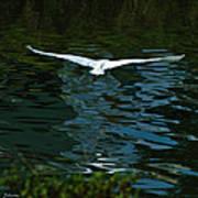 Flight Of The Egret Art Print