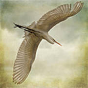 Flight Of The Egret Art Print