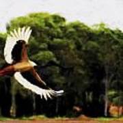 Flight Of The Jabiru V2 Art Print
