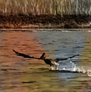 Flight Of The Pelican-featured In Wildlife-newbies And Comfortable Art Groups Art Print