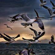 Flight Of The Seagulls Art Print
