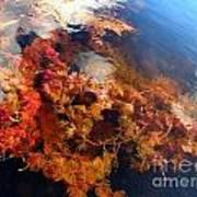 Floating Algae Art Print