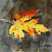 Floating Autumn Leaf Art Print