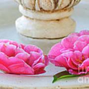 Floating Camellias Art Print